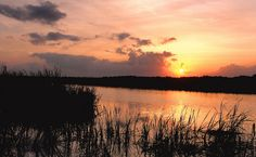 Arthur R. Marshall Loxahatchee National Wildlife Refuge in FL.  Photo Credit: Phil Kloer