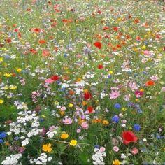 - ̗̀ saith my he A rt ̖́- Spring Aesthetic, Plant Aesthetic, Nature Aesthetic, Flower Aesthetic, Aesthetic Collage, Aesthetic Girl, Pretty Flowers, Wild Flowers, Field Of Flowers
