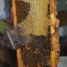 Dosya:Fork-Beekeeping .jpg