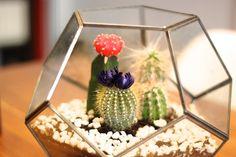 terrarium kaktus - Google Search