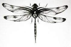 Dragonfly: