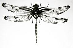 Dragonfly: