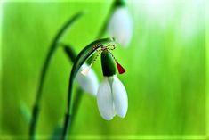 Happy Spring, Hello Spring, 8 Martie, Visit Romania, Holiday Traditions, Life Hacks, Plants, Baba Marta, Bullet Journal