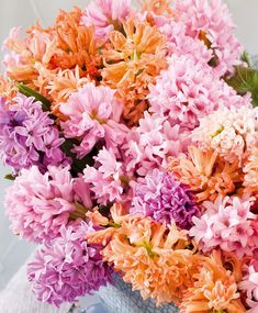 The Orange and Pink Hyacinth Special - Website Specials - Flower Bulb Index Spring Plants, Spring Bulbs, Spring Flowers, Bulbs For Sale, Oriental Lily, Parrot Tulips, Special Flowers, Planting Bulbs, Bulb Flowers