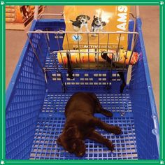 All Shopped Out