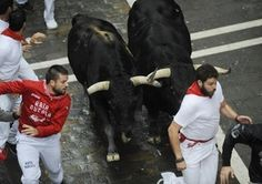 Can you get your money back on the guide?   - A huge fighting bull gored the American author of a survival guide for Spain's famed Pamplona bull-running festival on Wednesday when it turned its horns on him and other panicked daredevils.