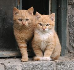 Feral kittens : Kot