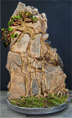 Image result for bonsai tree cling to rock climb