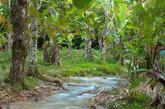 ¿Qué tal un paseo por la cascadas de Agua Azul en #Chiapas? ¿Vamos? #Mexico #Turismo