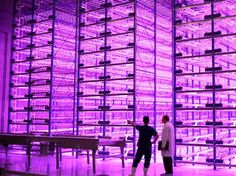 Architects have come up with spectacular concepts for vertical farms that would grow crops in city skyscrapers. But many horticulturists think the future of vertical farming isn't in skyscrapers, but rather in large, indoor warehouses lit up magenta by superefficient LEDs.