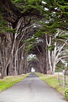 love love trees......