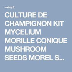 CULTURE DE CHAMPIGNON KIT MYCELIUM MORILLE CONIQUE MUSHROOM SEEDS MOREL SPORES | eBay