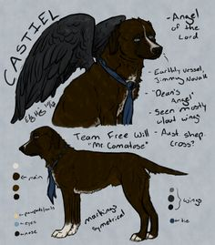 Castiel was finished before Sam woops. Again, I'm doing this for my own fun even though I know this has been done before. So not sure what kind of dog Castiel is, by looking at it I'd say Aussie sh...