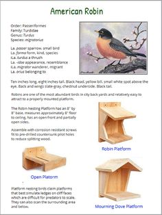 Select to view the American robin species page. Bird Facts, Bird Identification, American Robin, Bird House Plans, Birds In The Sky, How To Attract Birds, Pet Chickens, Backyard Birds, Annual Plants