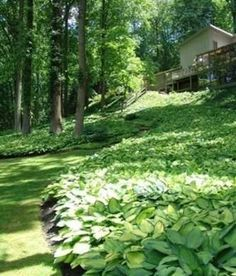 Often requiring less water than grass, ground covers are a smart—and beautiful—way to enhance any garden or landscape.