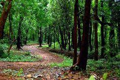 9. Dhoni Forest Trekking, Palakkad.jpg