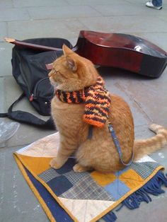 Bob the Street Cat from London with his owner James Bowen nearby. Bob wears his traditional neck scarf. He now has his own special little quilt for comfort, I see.