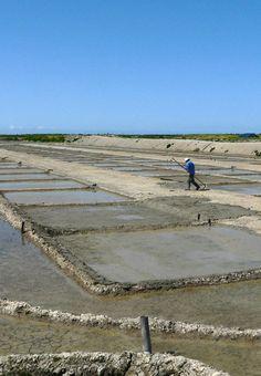 Un paludier (personne qui travaille dans les marais-salants) à l'île de Ré - France