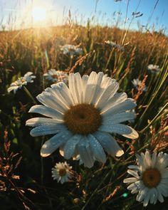 Shine || Psalm 119:135