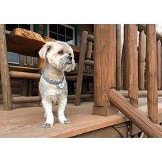 @jackiecous's photo: dog cabin