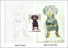 Step by Step Painting of Sammy the Dachshund by Fearon - Watercolor lesson- Step,by,Step,Painting,Fearon,Free Tutorials Network.shijieminghua.com