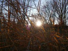 Trawy u podnóża górki na $roduli w Sosnowcu