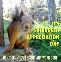 Squirrel Appreciation Day -  Don't expect to get any work done