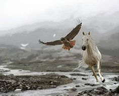 Eagles and Horses! All The Pretty Horses, Beautiful Horses, Animals Beautiful, Arte Equina, Animals And Pets, Cute Animals, Majestic Horse, White Horses, Horse Pictures