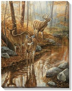 Backwater Passage Whitetail Deer Wrapped Canvas Art by Rosemary Millette Wildlife Paintings, Wildlife Art, Animal Paintings, Animal Drawings, Vida Animal, Deer Pictures, Hunting Art, Deer Art, Outdoor Art