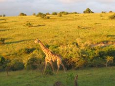 Lalibela Game Reserve, Eastern Cape, South Africa, 2006