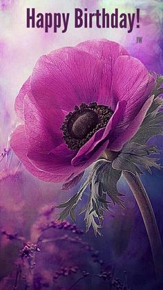 Purple flowers are a great way to add interest to your yard or landscape. See some of our favorite purple garden flowers! My Flower, Flower Art, Flower Power, Beautiful Flowers, Anemone Flower, Beautiful Beautiful, Purple Poppies, Purple Flowers, Wild Poppies