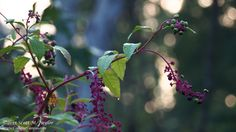 Berries and Bokeh by Scott Taylor on 500px