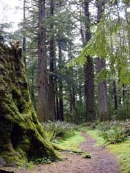 Oregon scenic trail