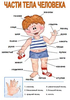 My body poster for classroom by Effective Teaching Aids Improve English, Learn English, Vocabulary Worksheets, English Vocabulary, Body Parts Preschool, Effective Teaching, Learn Russian, Teacher Notebook, English Activities