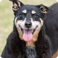 Adopt A Pet :: Jake - Key Biscayne, FL