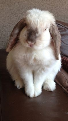 bunny A Happy Easter bunny! :)  Wixh everyone a great weekend!