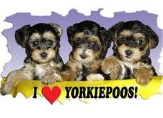 i luv yourkiepoos!