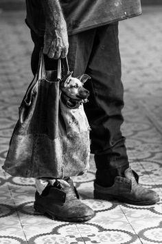 """"""" little friend """" by Gennaro Negri on 500px~♛"""