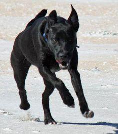 Mowgli the Labrador Retriever Mix Pictures 953171