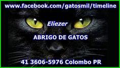 https://www.facebook.com/gatosmil/timeline
