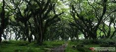 Paket Wisata Banyuwangi 2 Hari 1 Malam Valuable Tour - E - paket wisata banyuwangi, paket tour banyuwangi Tours, Plants, Plant, Planets