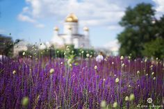 Summer in Moscow!