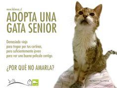 Campañas - Adopta