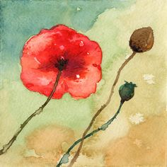 Poppies, via Flickr.