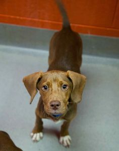 Hancock was adopted!