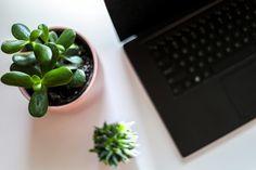 Find out the Best 15 Office Desk Plants Ideas Best Office Plants, Cool Office Desk, Cool Plants, Desk Plant, Succulents, Packaging Design, Design Trends, Laptop, Ideas