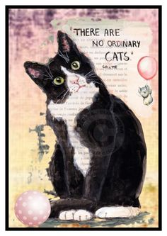 No Ordinary Cats by skpg on Polyvore featuring art