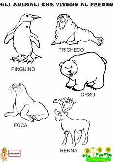 84 Fantastiche Immagini Su Polo Nord Animali Bambini E Kids Crafts