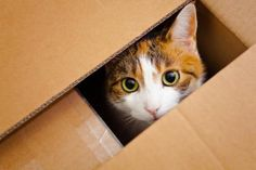 Best tips for moving a cat long distance #movingwithpets