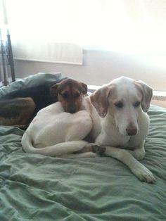 Do It Yourself-complete Dog Training Program - http://dogtraining-4gswcqzf.thetruthfulreviews.com/